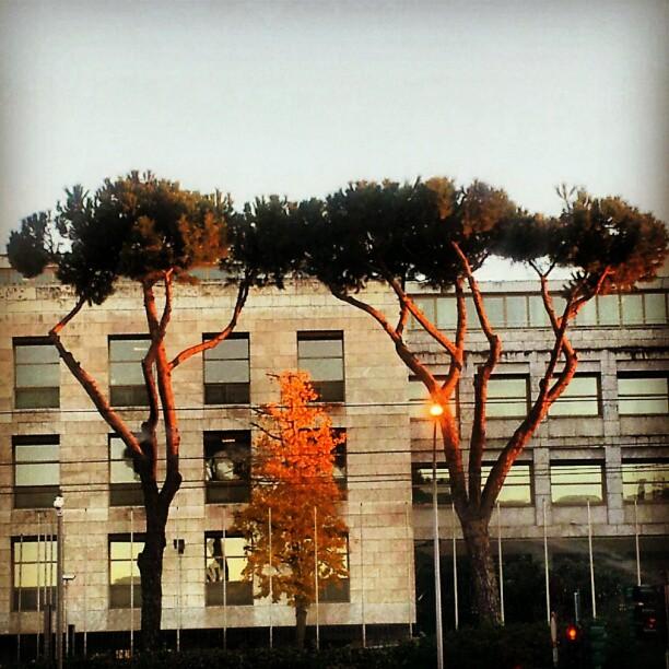La Fao a Roma: riflessi di speranza o di illusione? (LC)