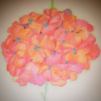 Poppies flower, pencil, 2015