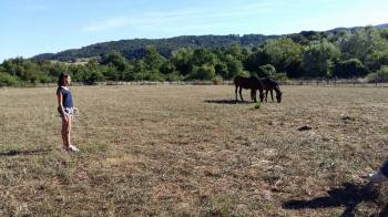 Cavalli alla Contea